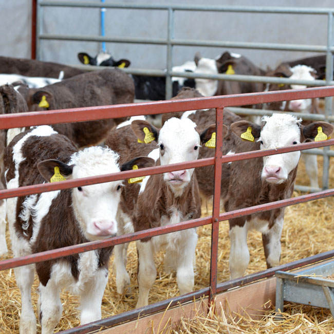 Linden Livestock